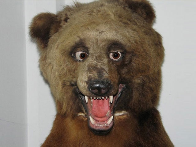 terrible_taxidermy_1