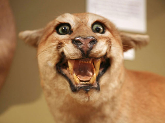 terrible_taxidermy_10