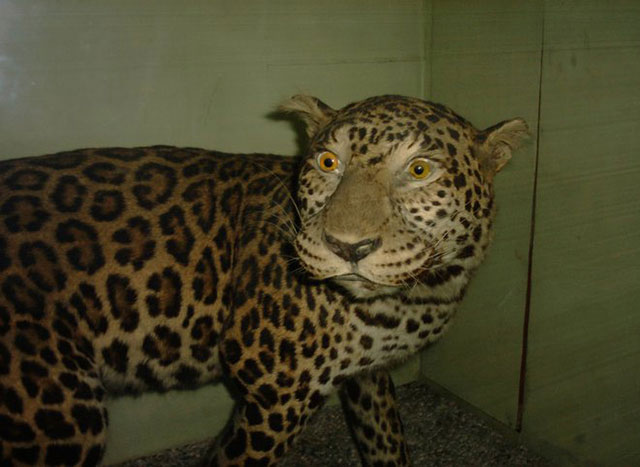 terrible_taxidermy_12