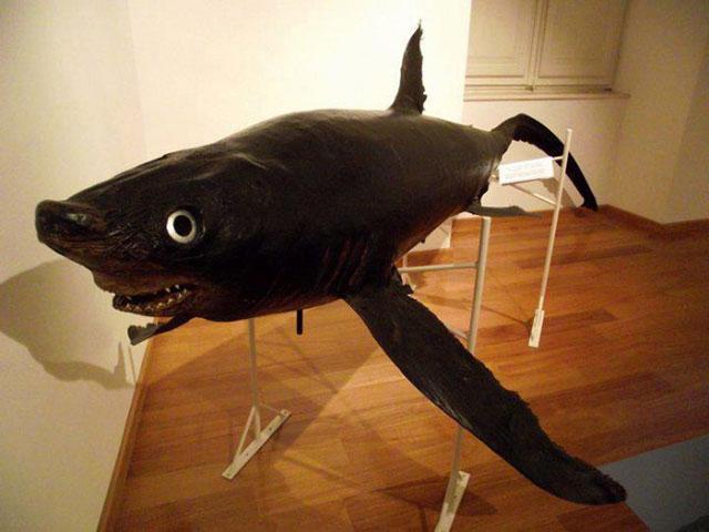 terrible_taxidermy_13