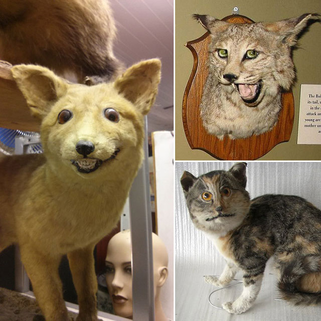 terrible_taxidermy_17