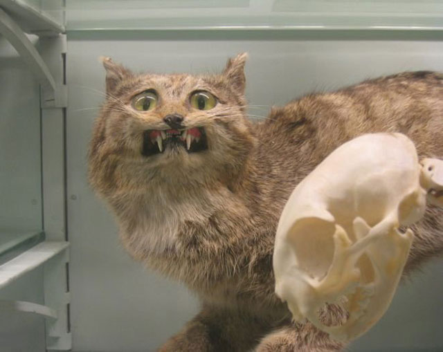 terrible_taxidermy_2