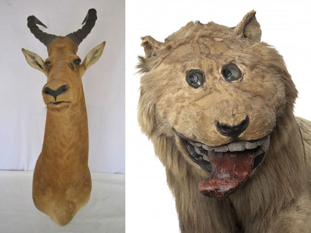 terrible_taxidermy_3