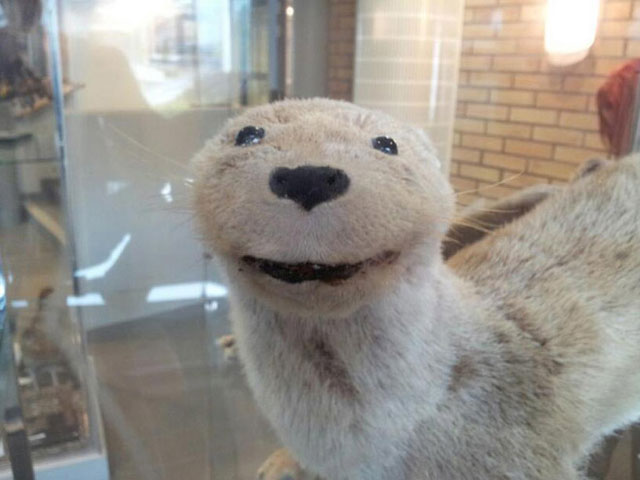terrible_taxidermy_6