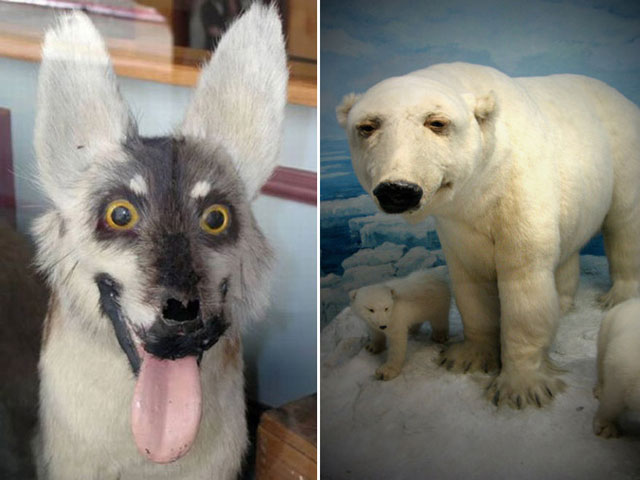 terrible_taxidermy_7