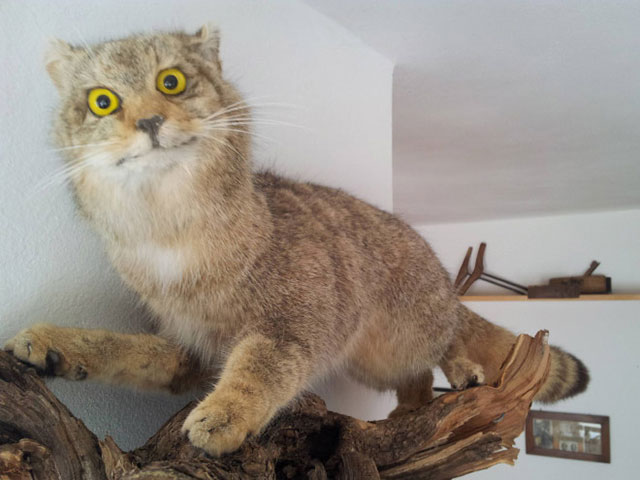 terrible_taxidermy_8