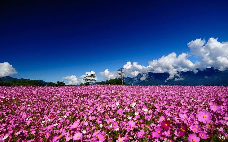 flower fields (1)