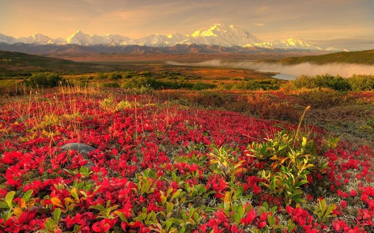 flower fields (2)