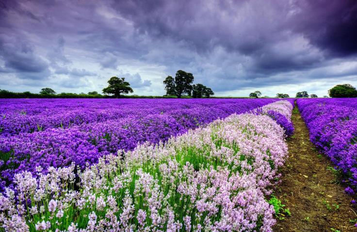 flower fields (4)