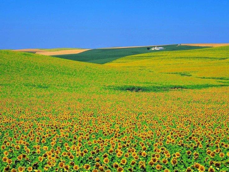flower fields (5)