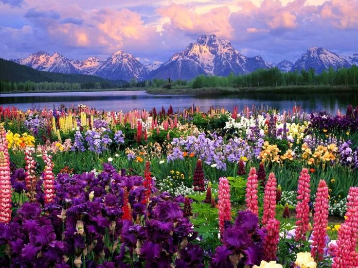 flower fields (6)