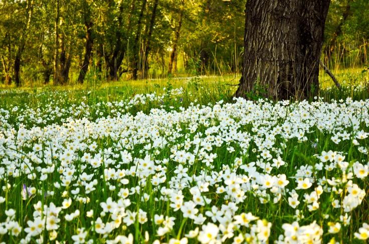 flower fields (9)