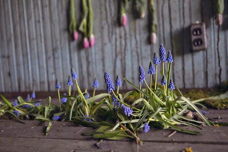 flower-house-lisa-waud-florist
