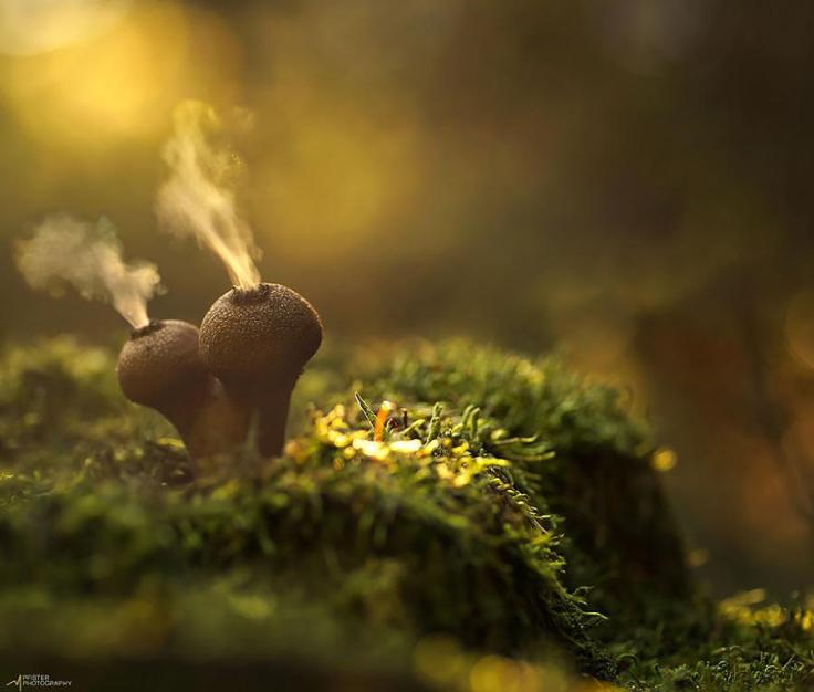 mushrooms-puffballs