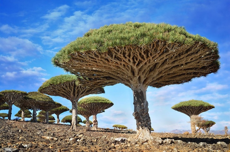 150655-R3L8T8D-880-amazing-trees-14