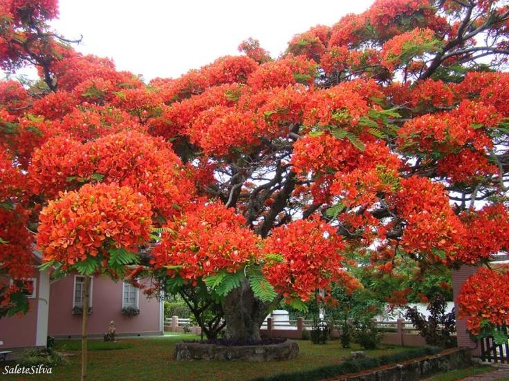 150705-R3L8T8D-880-amazing-trees-15