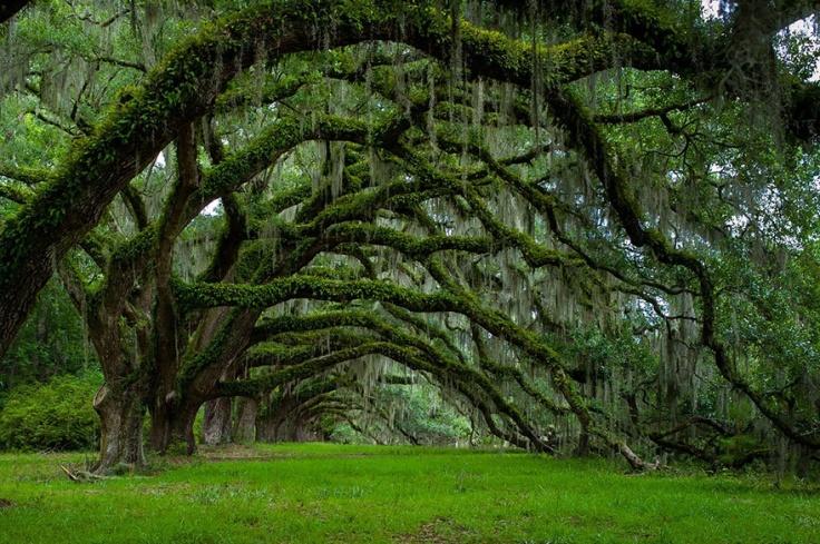 150755-R3L8T8D-880-amazing-trees-17