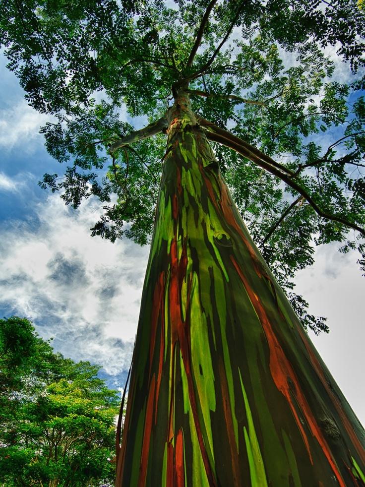 150855-R3L8T8D-880-amazing-trees-19-1