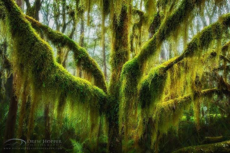 151155-R3L8T8D-880-amazing-trees-23
