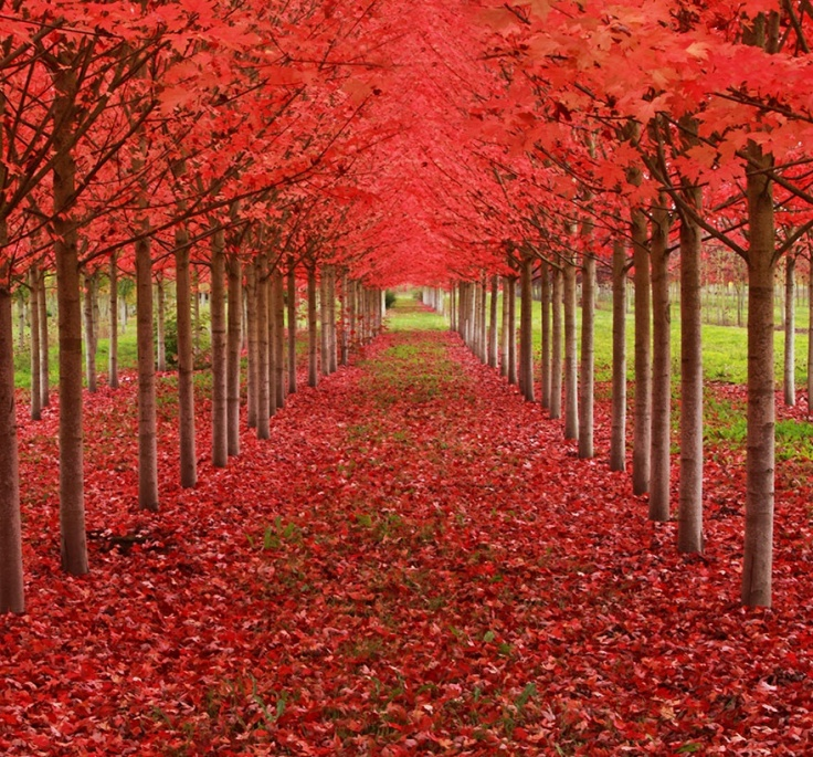 151205-R3L8T8D-880-amazing-trees-4
