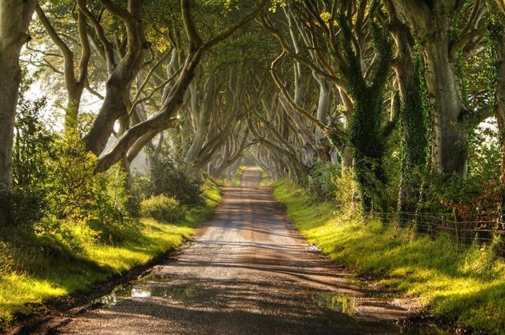 151305-R3L8T8D-880-amazing-trees-6-2