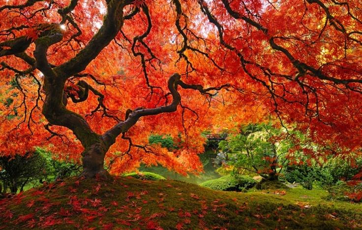 151405-R3L8T8D-880-amazing-trees-8