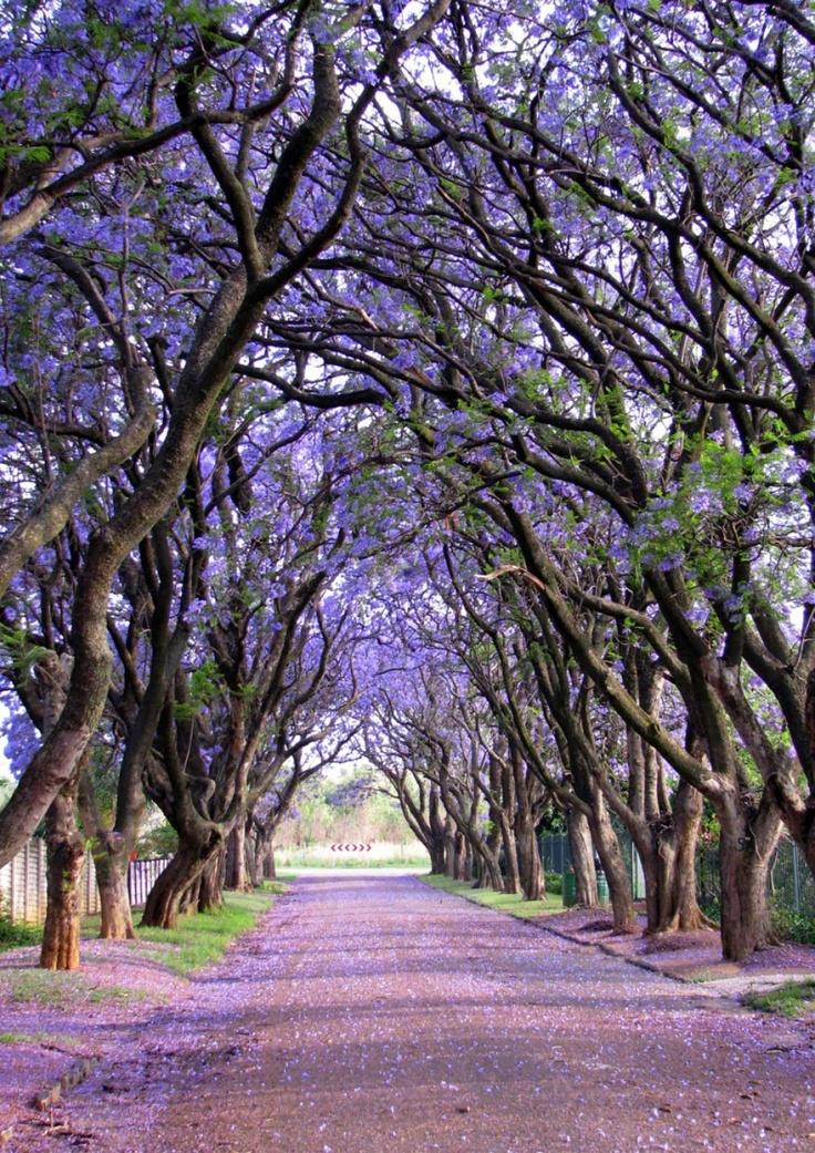 151455-R3L8T8D-880-amazing-trees-9