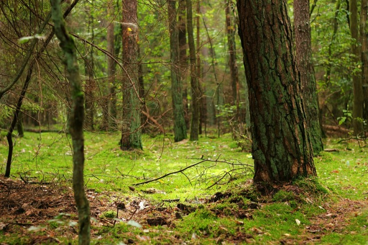 forest-433523_960_720