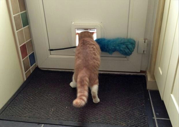 12 FUNNY PICTURES OF CATS 2