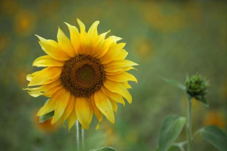 summer-sun-yellow-spring