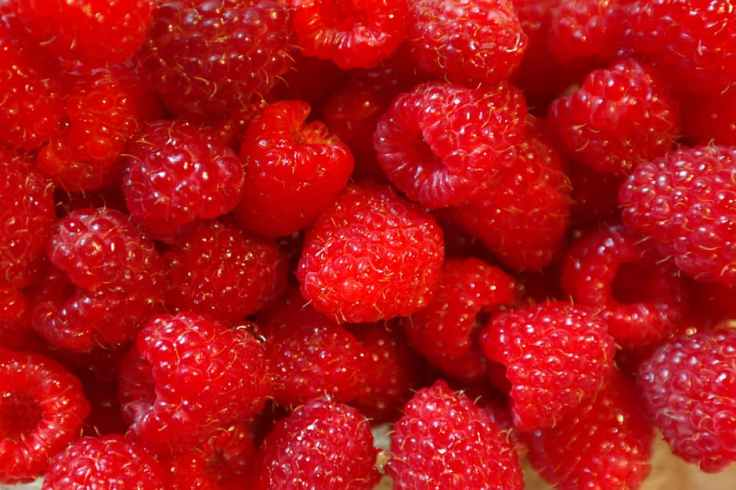 raspberries-fruits-fruit-berries-59999